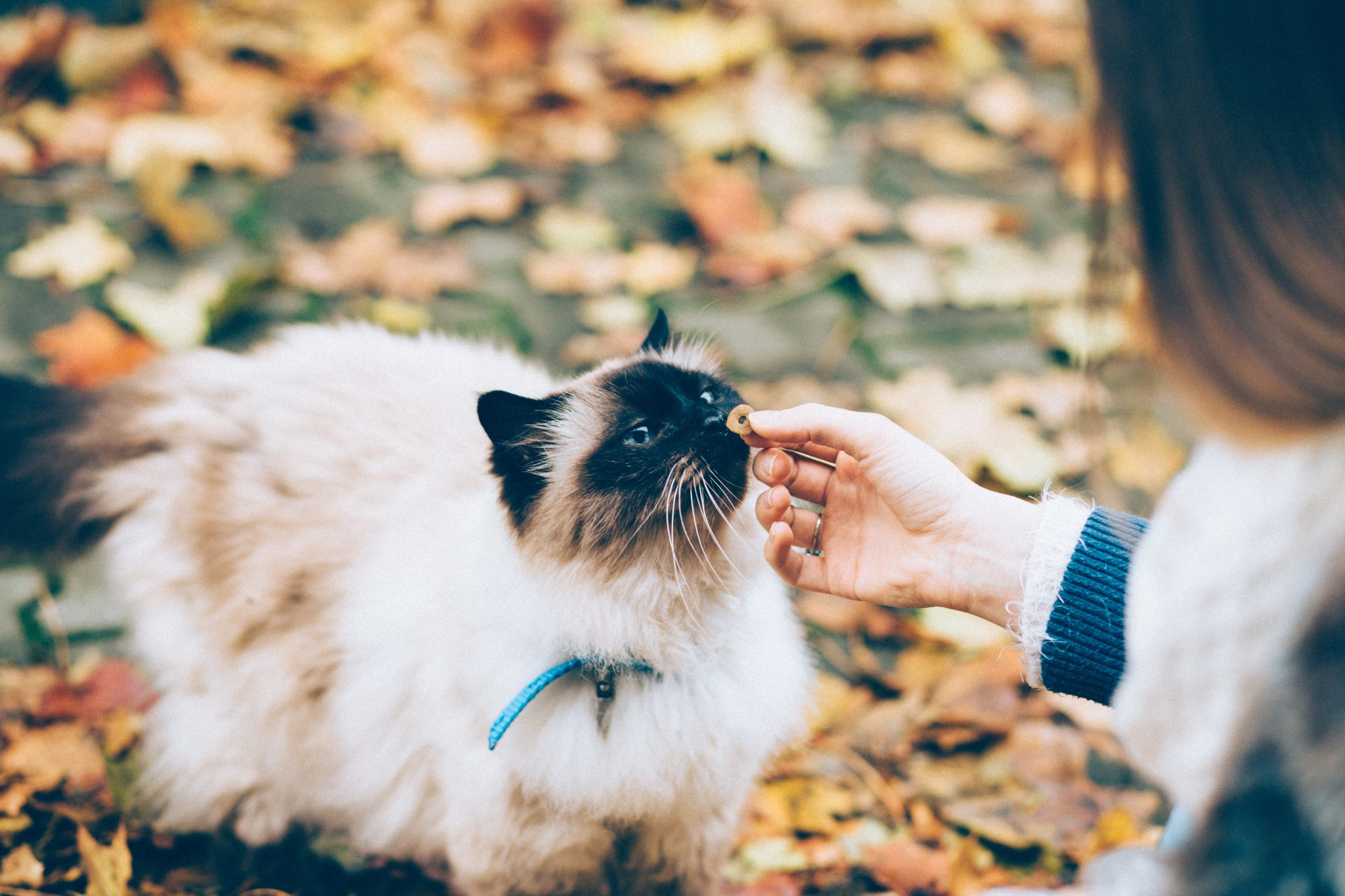 cats caring