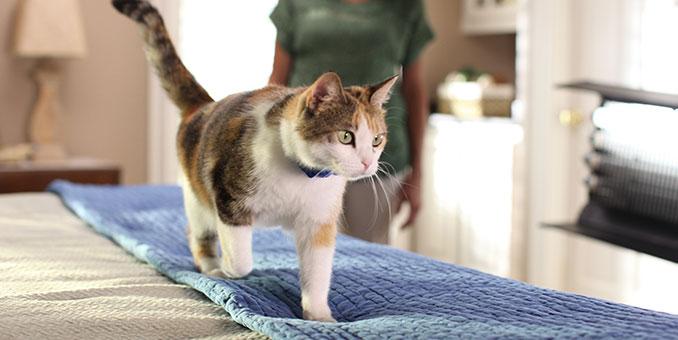 traning cat